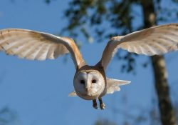 owl-inspired-noiselss-aircraftin-the-pipeline