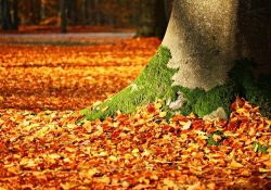 autumn-leaves -a-manifestation- of-natural-life